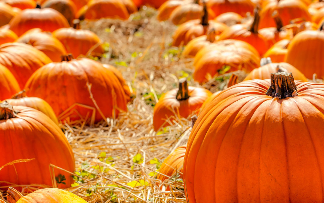 Get Into The Fall Spirit At These Pumpkin Patches!